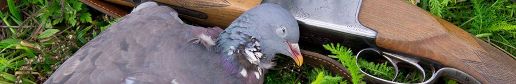 Chasse : plus de 30 millions d'animaux tués chaque année