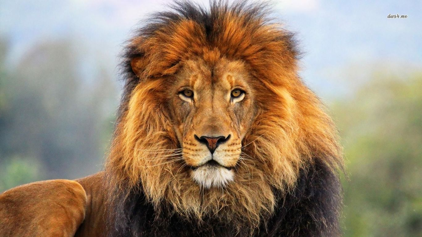 Real Lione