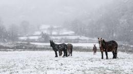 les-chevaux-se-sont-refugies-sur-un-plateau-a-2000-m-d-altitude-et-sont-cernes-par-la-neige