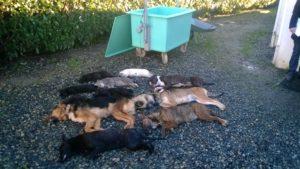 chiens euthanasiés à la SPA de Pau 2010-2014