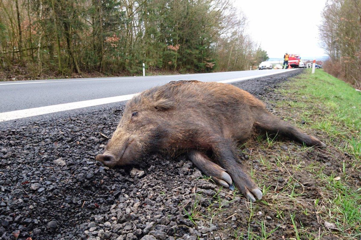 Collision avec un animal: pour une légitime obligation d'assistance