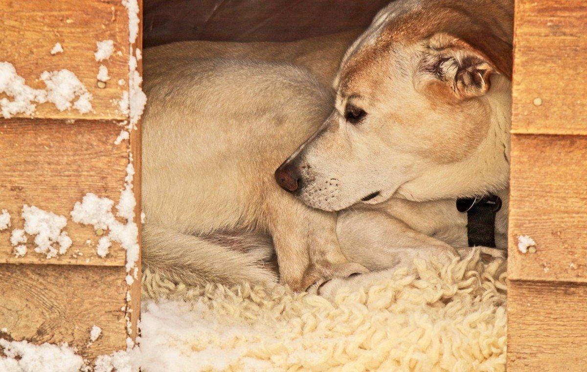 Un chien peut-il vivre dehors au froid tout l'hiver ?