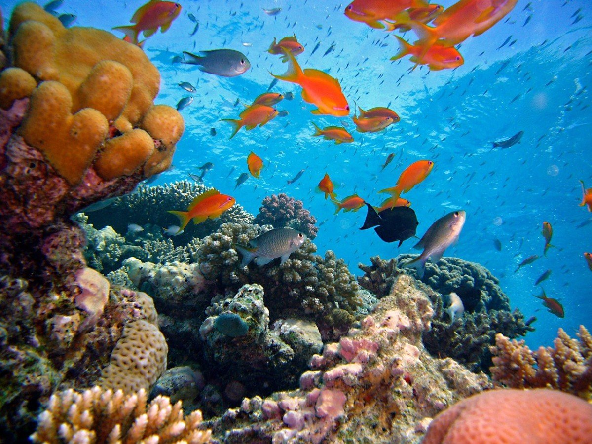 6 mois pour offrir une chance aux poissons avec des aires maritimes strictement protégées en métropole et outre-mer
