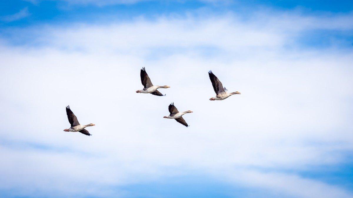 Exprimez-vous pour vous opposer au décret visant à autoriser la chasse de certaines espèces d'oiseaux hors période de chasse et à justifier la conservation des chasses traditionnelles