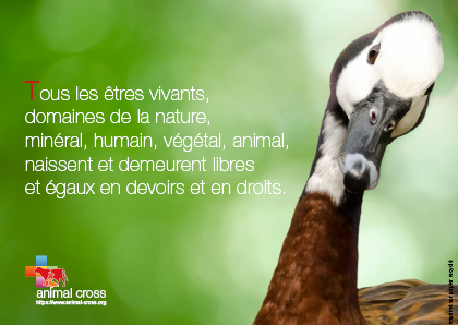 Déclaration des droits de la nature