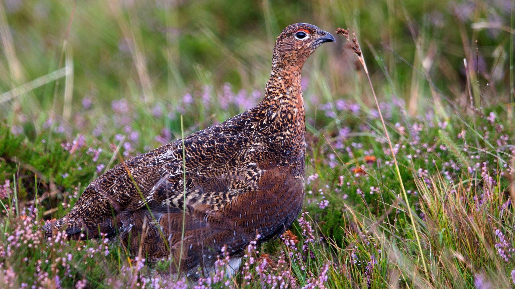 Nouvelle consultation publique concernant les dates d'ouvertures et clôture de la chasse dans l'Orne